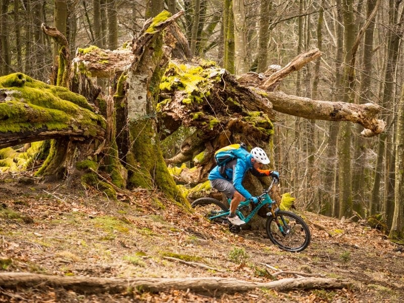 Deep in the Basque Forest