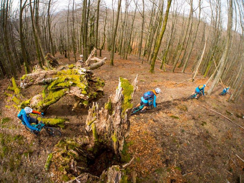 Basque Forest