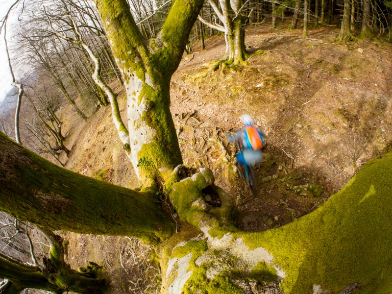 Basque Rooty Trails