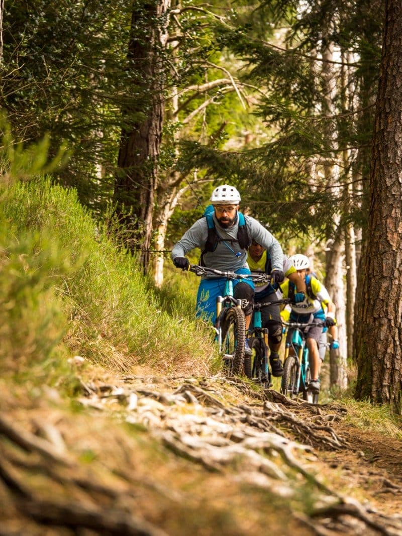 Rooty Basque Trails