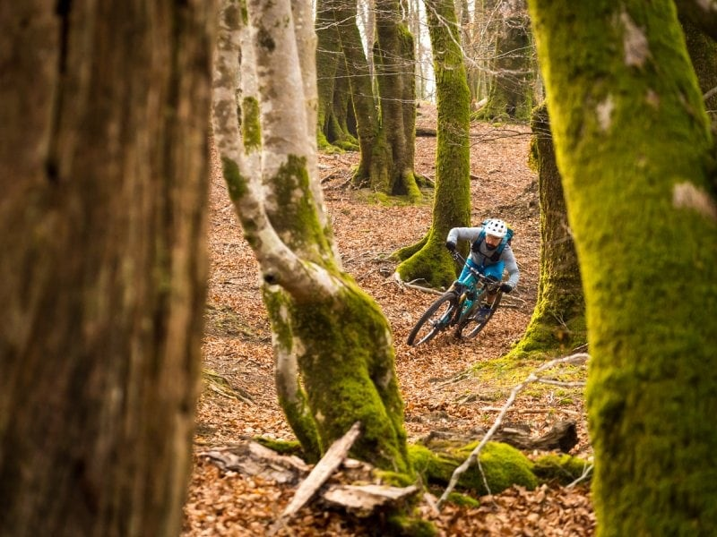 Riding in the Basque Forest