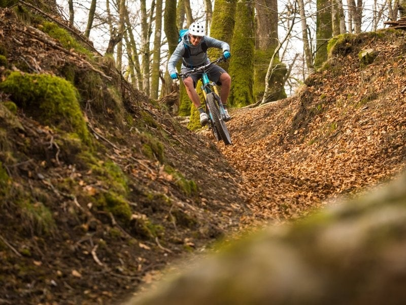 Natural Berms in the Basque Forest