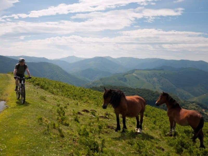 Tim, Peter, Peter and Rocky With Some Wild Horses